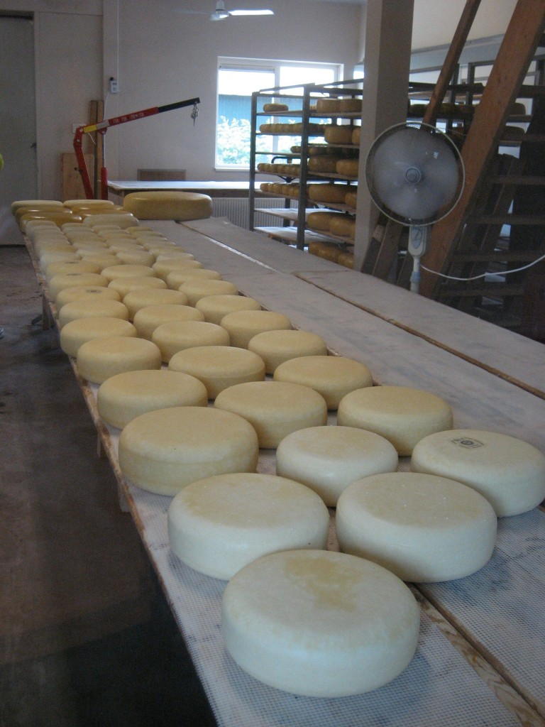 Cheese drying 768x1024 - Say Cheese