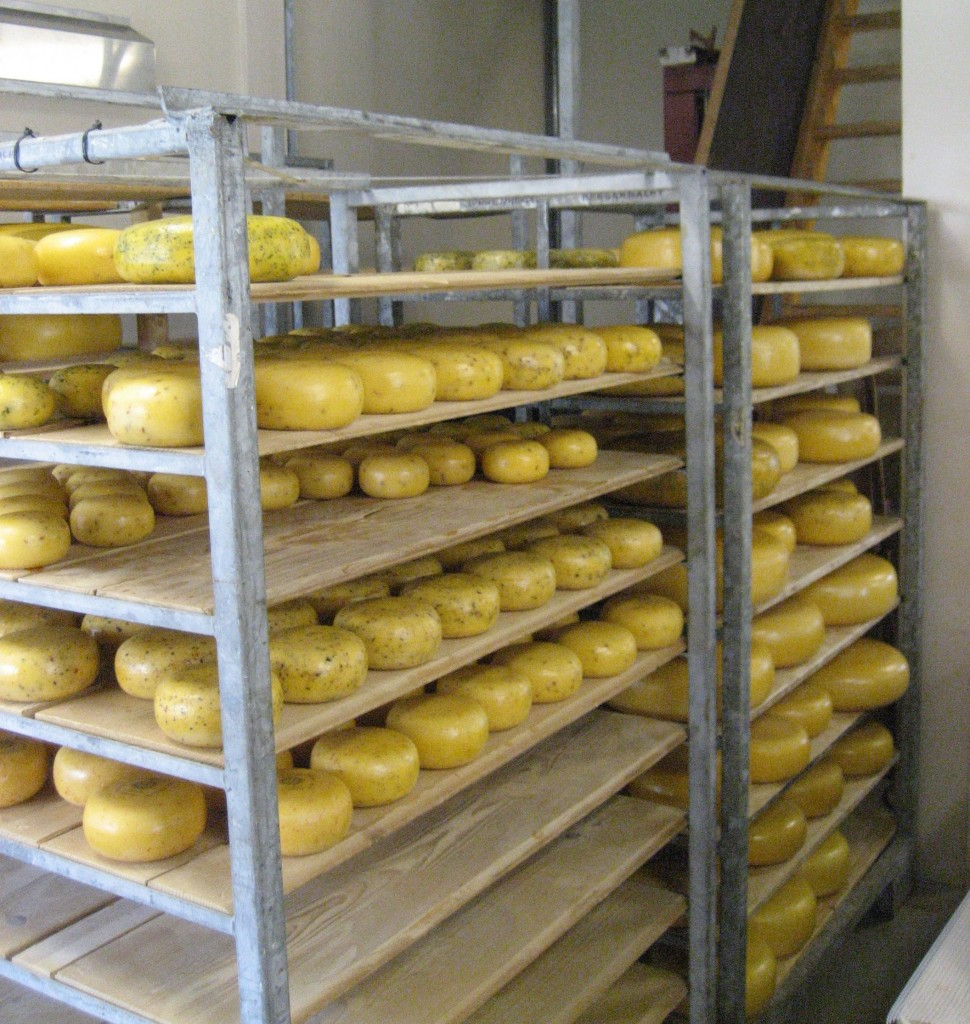 Cheese drying2 970x1024 - Say Cheese