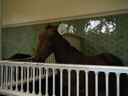 Queen P2d 430x323 - Queen horses P2