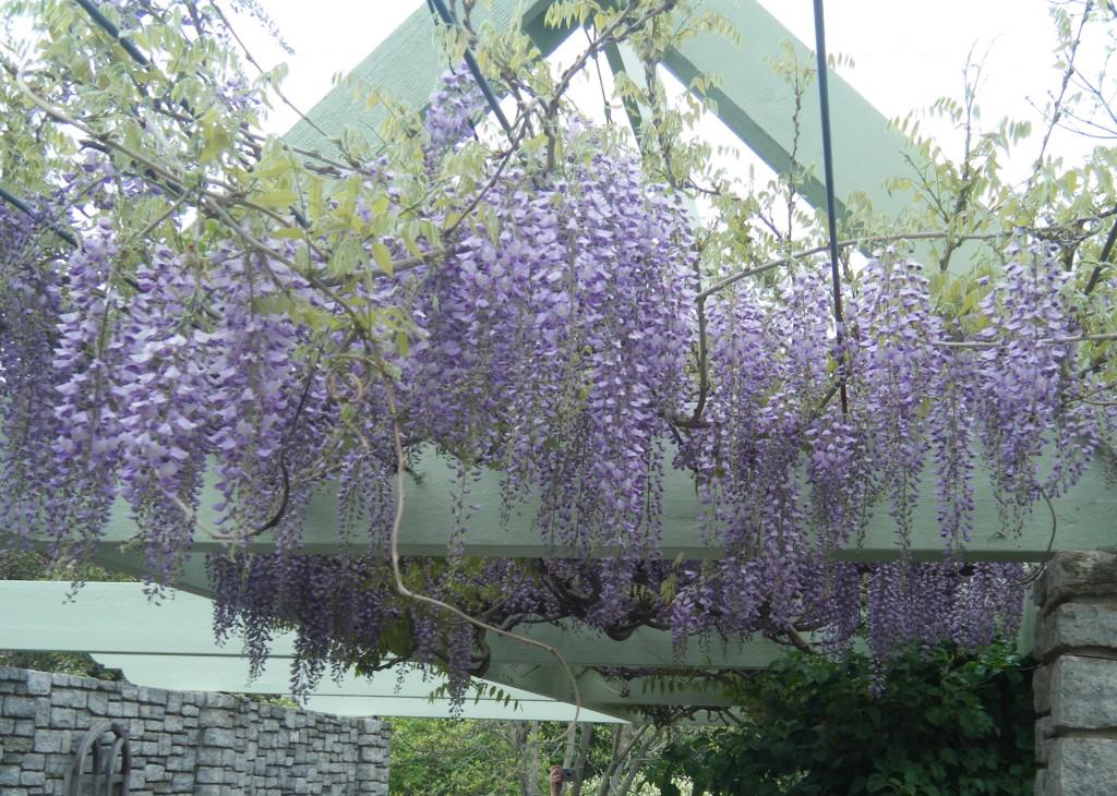 DSCF0113 1024x730 - Pops of Purple