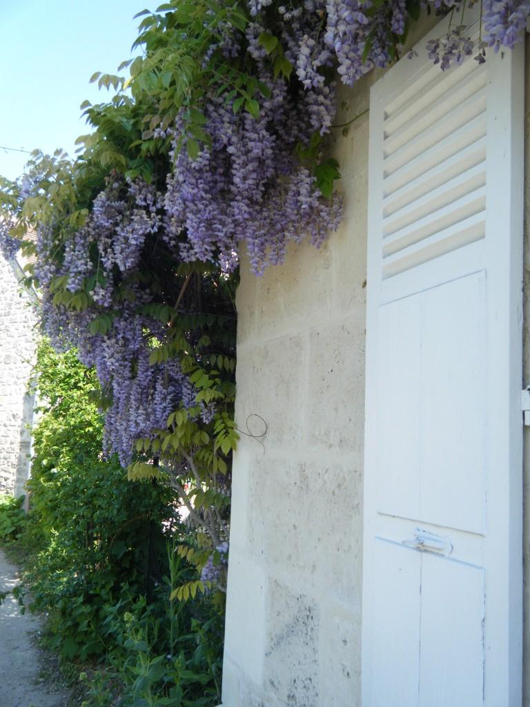 DSCF0567 768x1024 - Pops of Purple