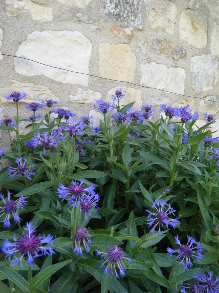 DSCF05751 768x1024 - Pops of Purple