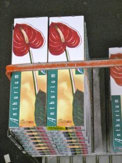 Flower market close up boxes 242x323 - A Visit to the International Flower Market