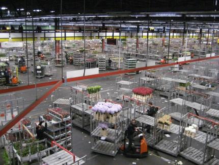 flower market carts 430x323 - A Visit to the International Flower Market