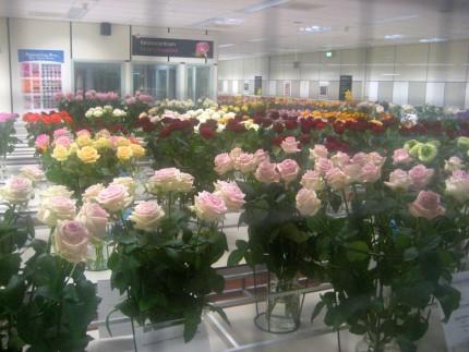 flower market testing 430x323 - A Visit to the International Flower Market