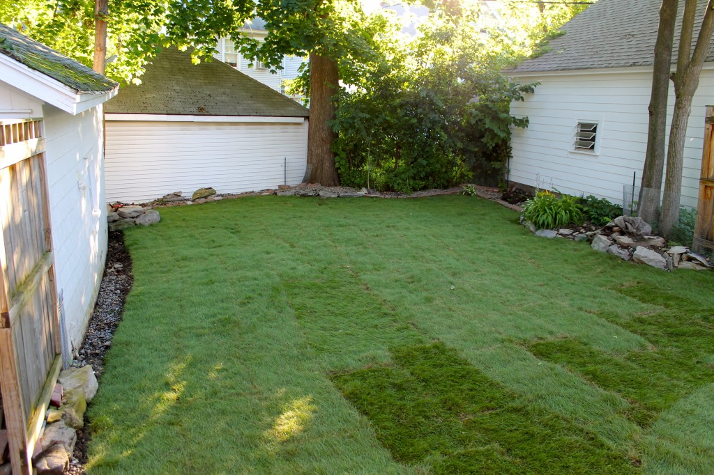 Backyard finished 1024x682 - It's Not Easy Being Green
