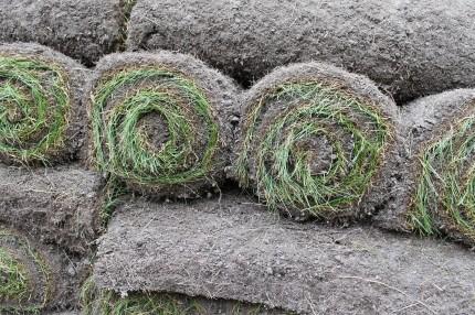 Backyard sod in roll 430x286 - It's Not Easy Being Green