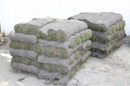 Backyard sod on pallet 430x286 - It's Not Easy Being Green