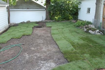 Backyard sod progress 430x286 - It's Not Easy Being Green