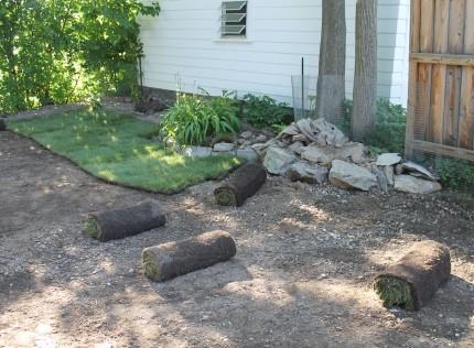 Backyard sod start 430x316 - It's Not Easy Being Green
