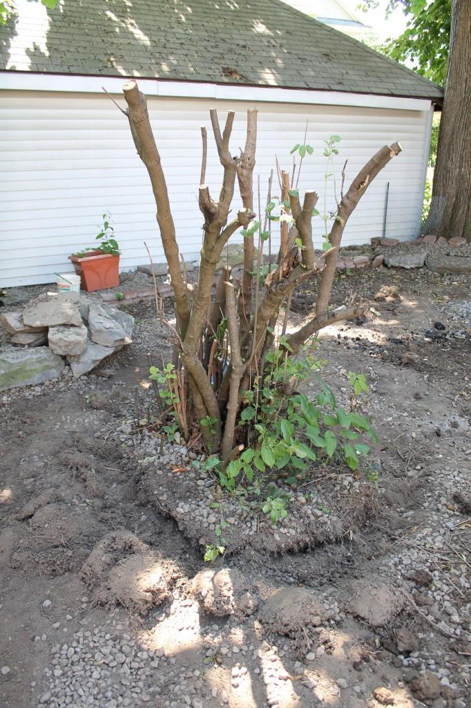 Backyard tree 682x1024 - It's Not Easy Being Green