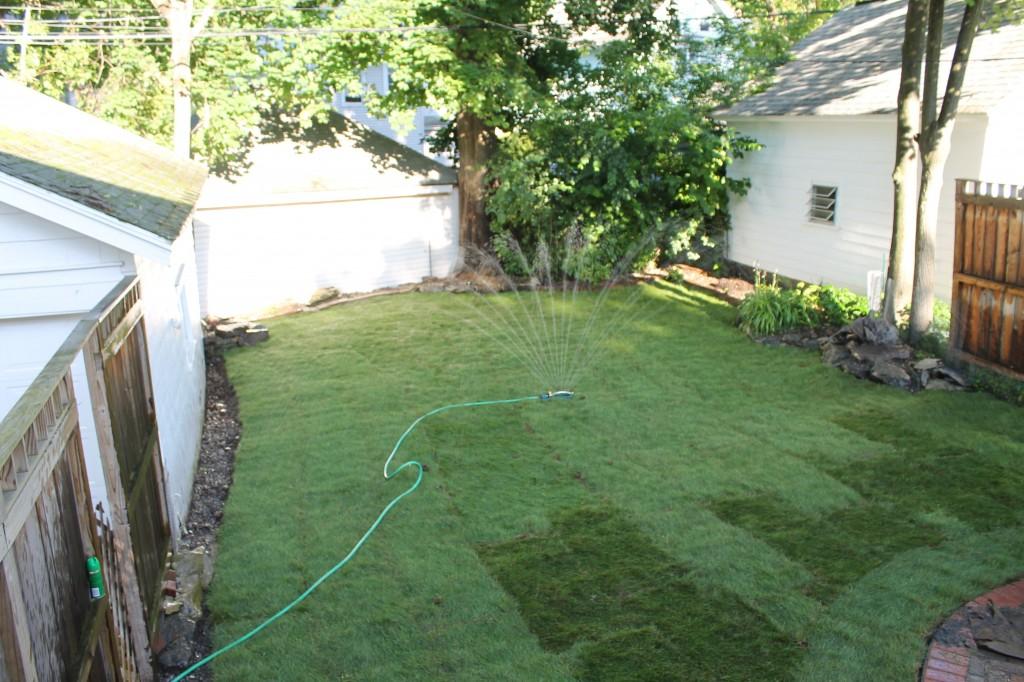 Backyard water 1024x682 - It's Not Easy Being Green