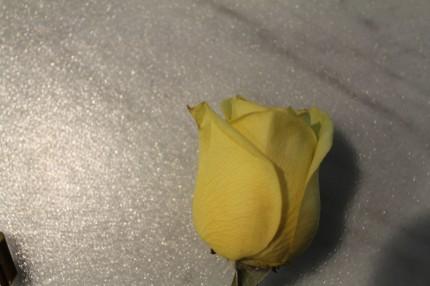 IMG 0627 430x286 - Rose Revival