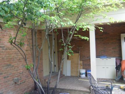 DSCF1904 430x323 - Courtyard Reveal