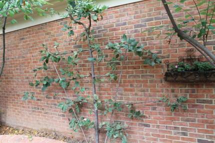 IMG 0749 430x286 - Courtyard Reveal