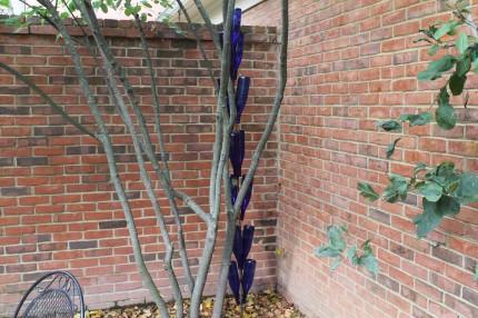 IMG 0750 430x286 - Courtyard Reveal