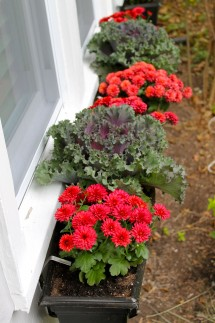 boxes fall 215x323 - Fall window boxes