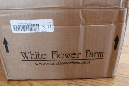 Flowers box 430x286 - Flowers