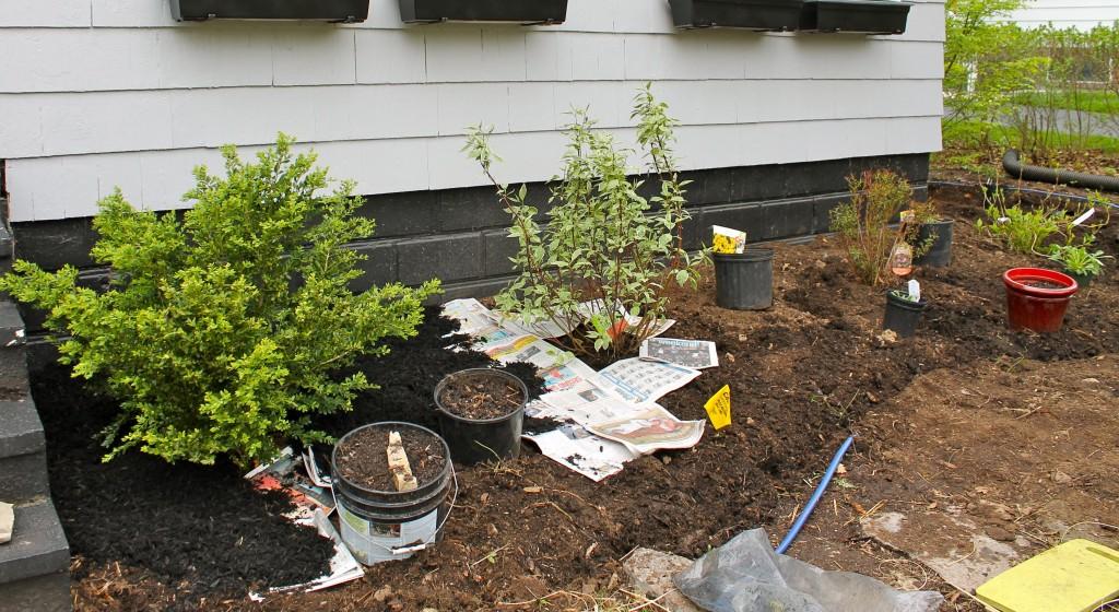 Yard newspaper 1024x560 - Our Front Yard Progress