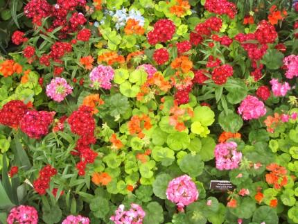 Gardens 2 430x323 - Monet's Garden