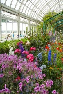 Gardens 3 217x323 - Monet's Garden