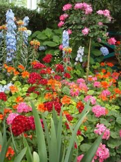 Gardens 4 242x323 - Monet's Garden