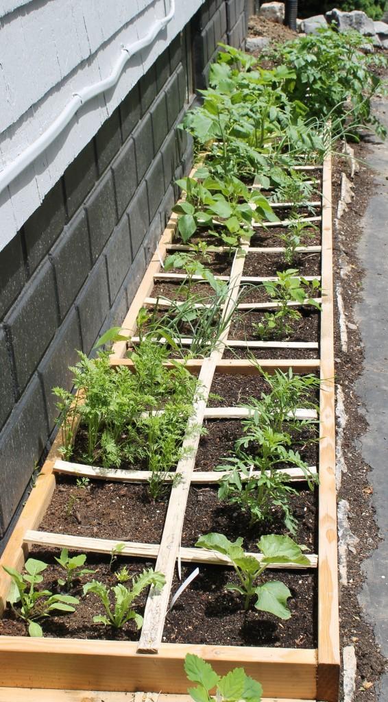 Slugs garden 566x1024 - Garden Update