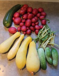 Garden produce 1 250x323 - Garden
