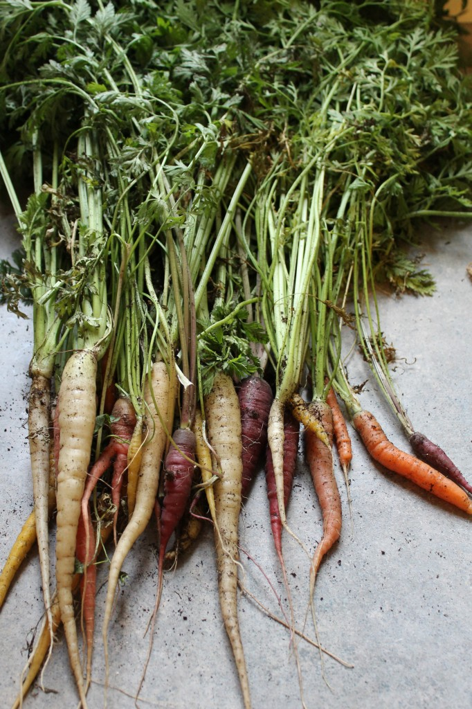 Garden produce 2 682x1024 - Garden Update