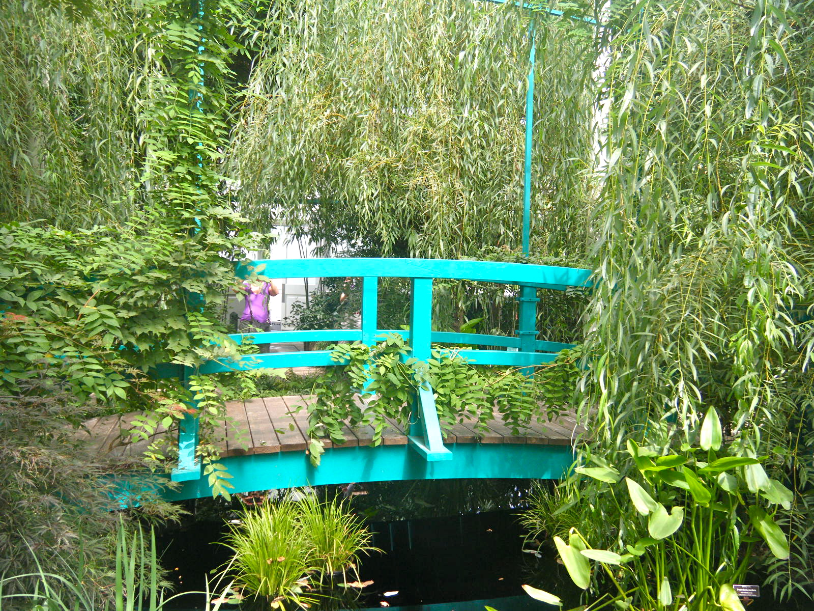 DSCF3478 - Monet's Lily Pond, NYC Style