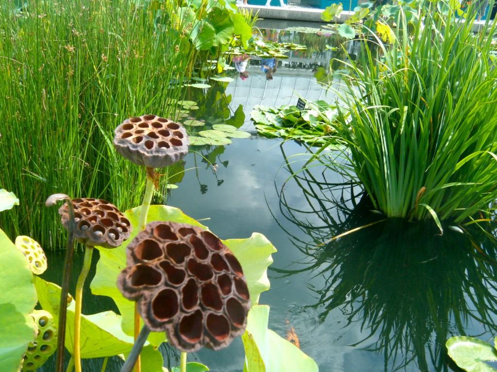DSCF3496 1024x768 - Monet's Lily Pond, NYC Style