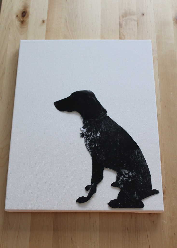 Dog gracie 734x1024 - Gracie the Model