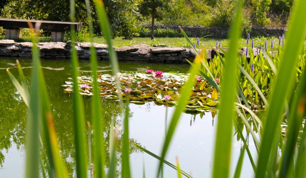 IMG 2888 1024x594 - Visiting a Japanese Garden