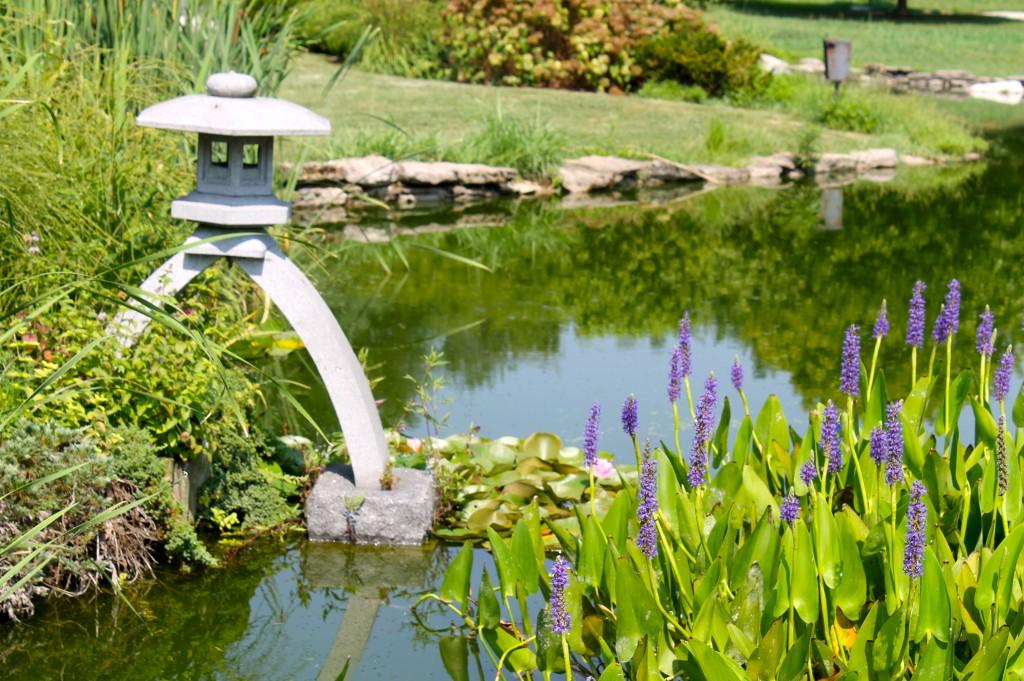 IMG 2890 1024x681 - Visiting a Japanese Garden