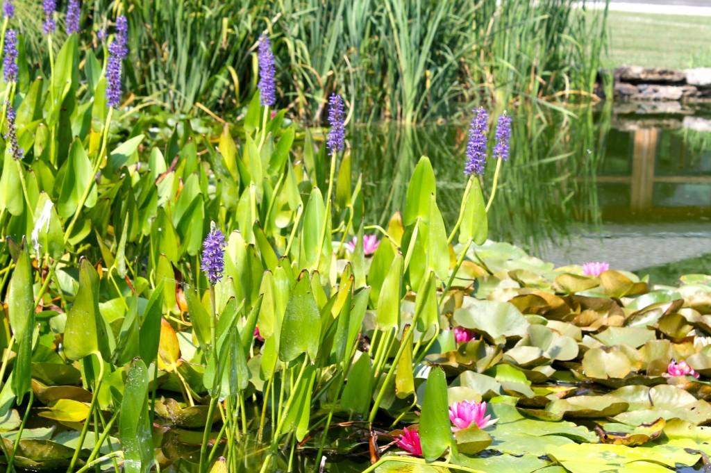 IMG 2891 1024x681 - Visiting a Japanese Garden