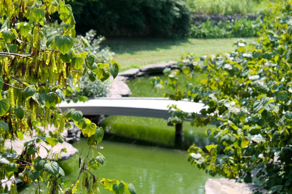 IMG 2903 1024x681 - Visiting a Japanese Garden