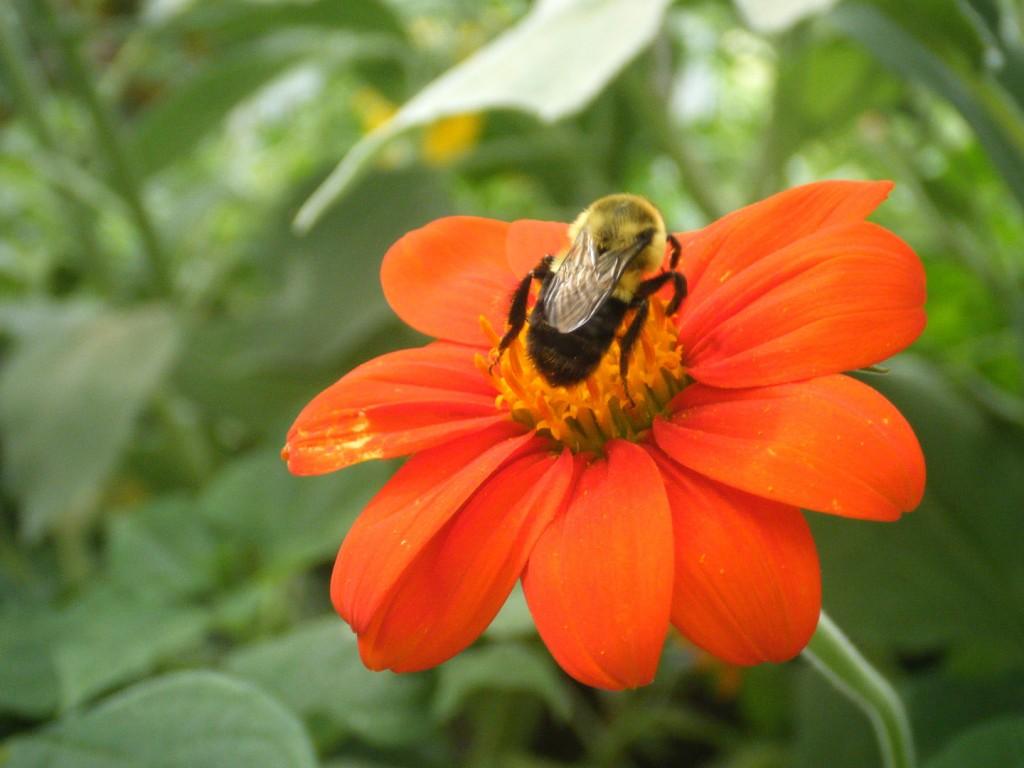 DSCF3456 1024x768 - Meet Marie Bee