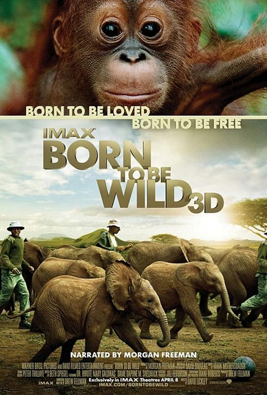 born-to-be-wild-