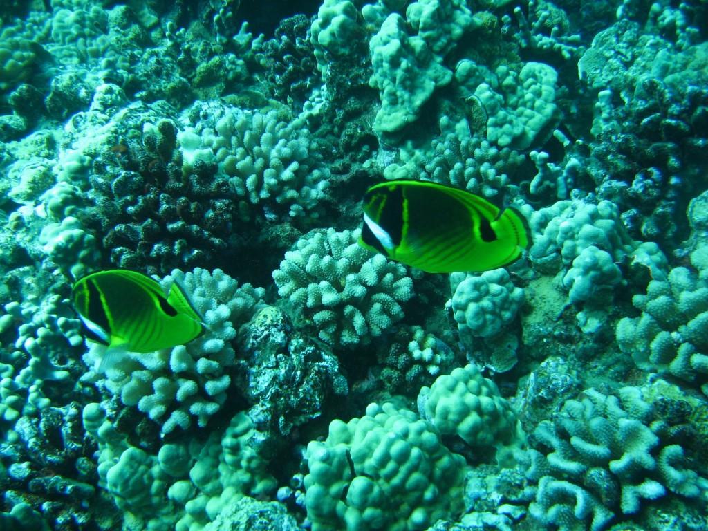 Coral hawaii 1024x768 - DIY a Summer Look with Coral