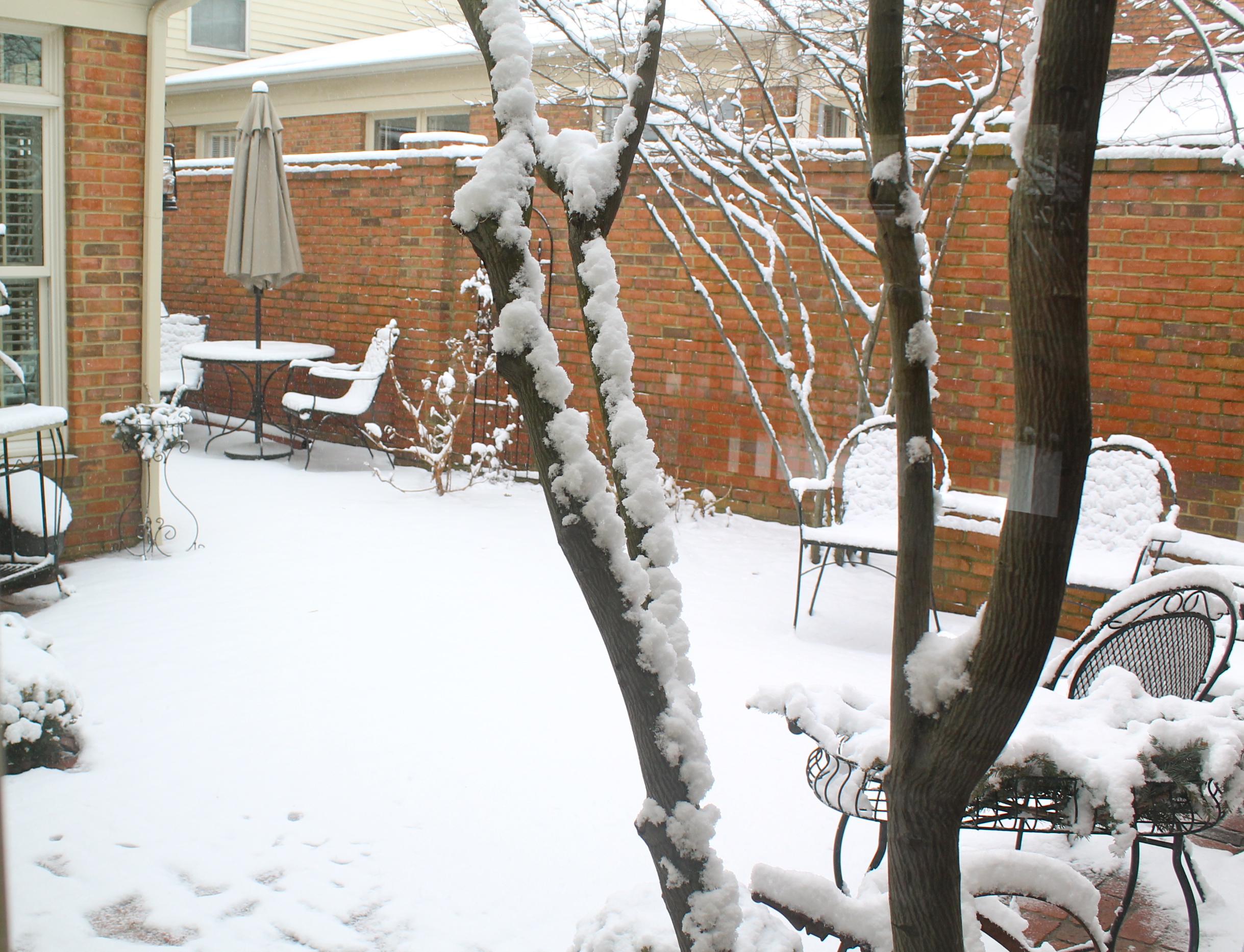 IMG 6934 - Snow Daze
