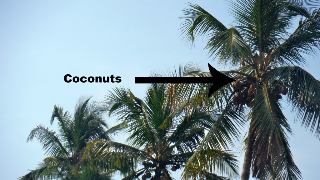 Coconuts 1024x577 - The Rug Process Revealed
