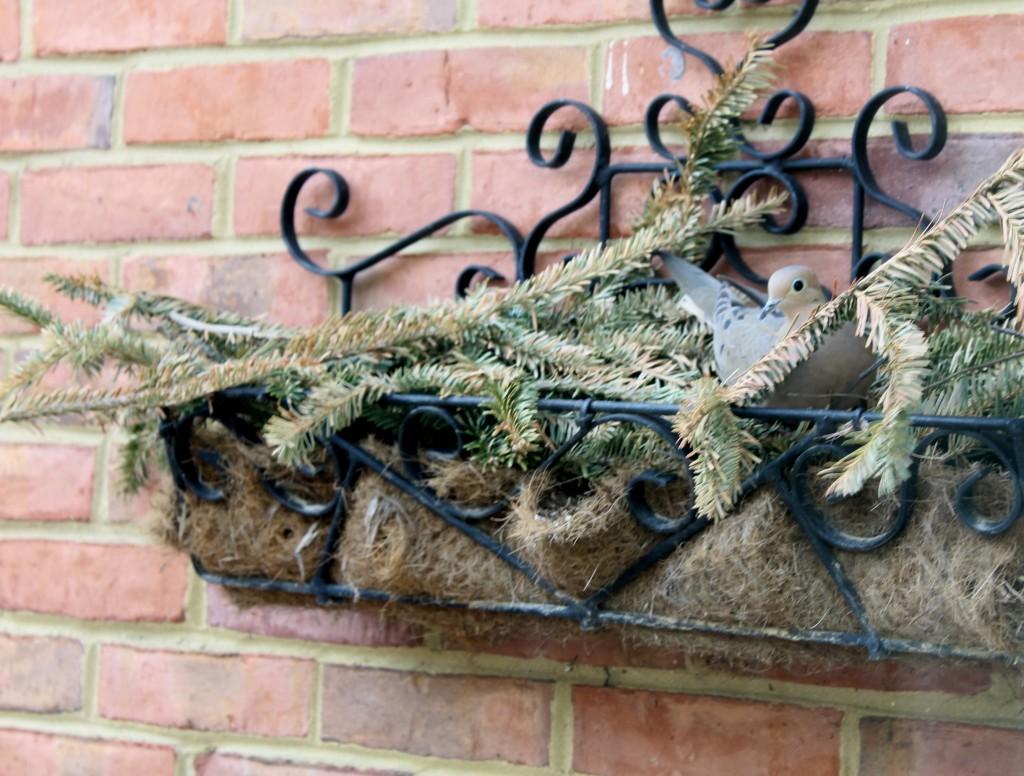 The 2 Seasons love doves