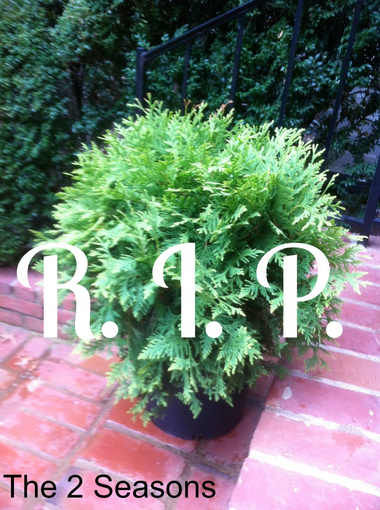 R.I.P. plant 764x1024 - The Three Plants for Container Gardens
