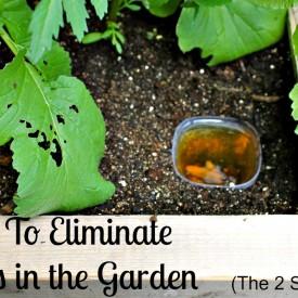 Slugs and leaves 1024x708 275x275 - How To Eliminate Garden Slugs