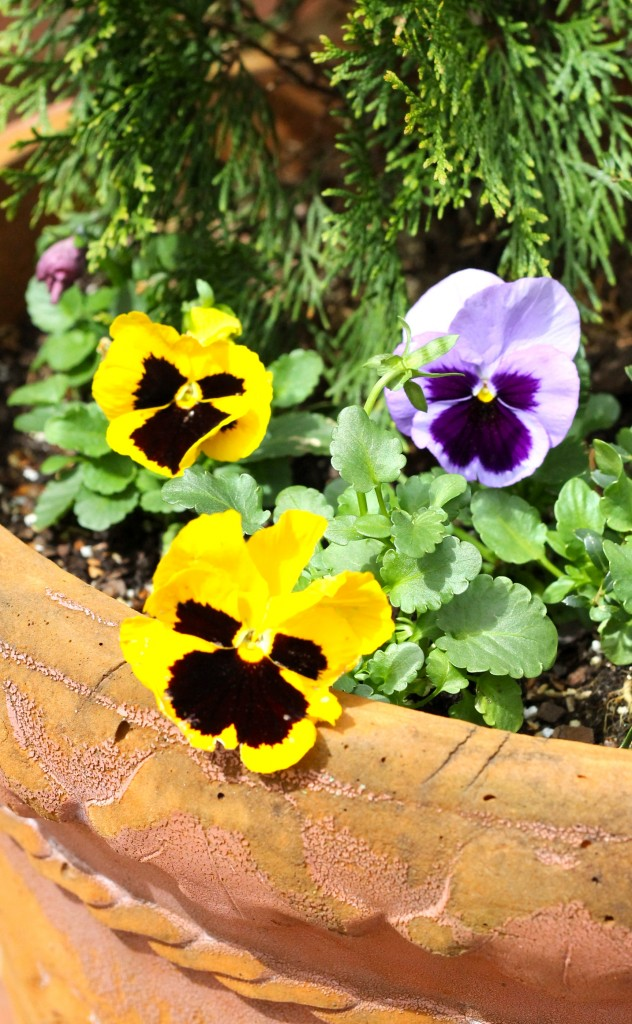 IMG 0422 632x1024 - Update on the Front Porch Planter