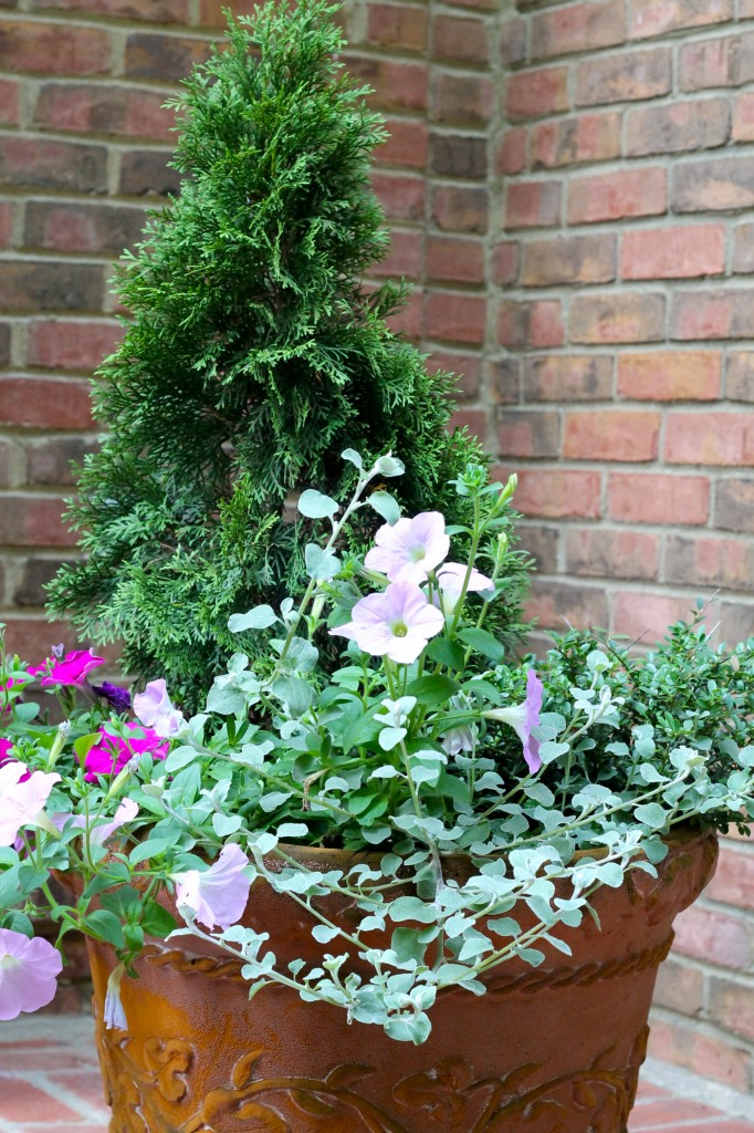 IMG 0898 682x1024 - Update on the Front Porch Planter