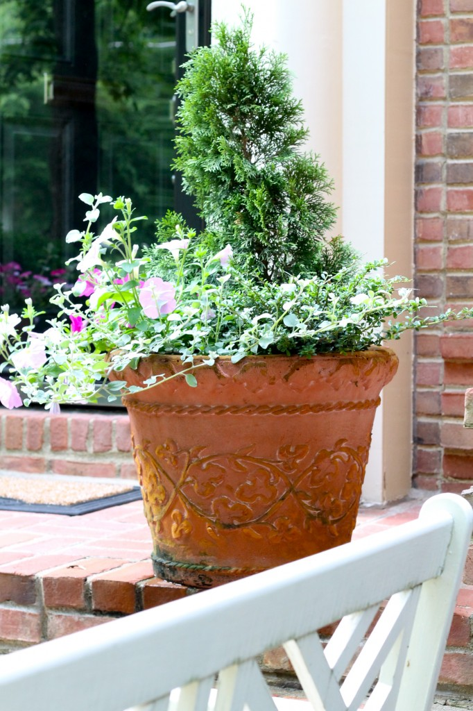 IMG 0907 682x1024 - Update on the Front Porch Planter
