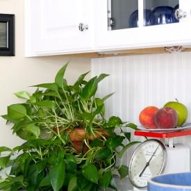 Kitchen cabinet w/ glass