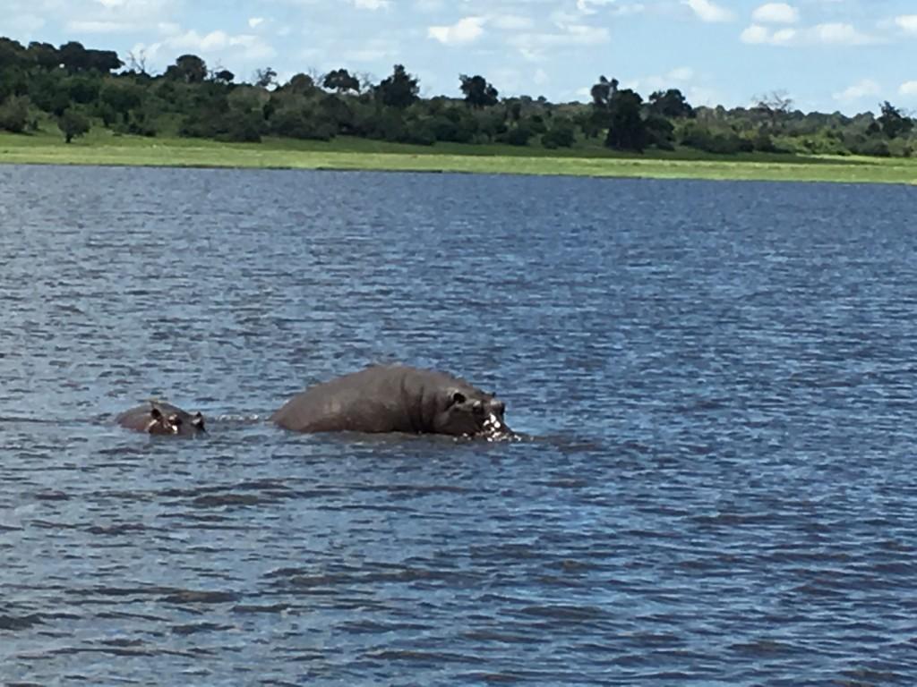 IMG 3656 1024x768 - Our Trip to Botswana