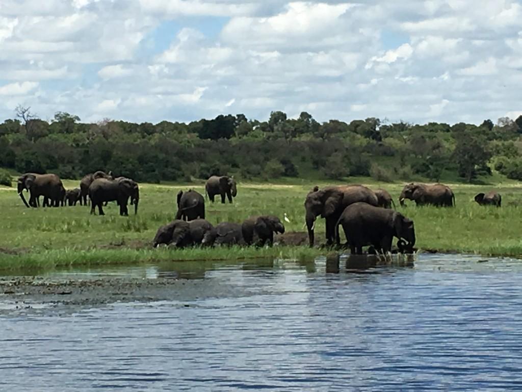 IMG 36671 1024x768 - Our Trip to Botswana